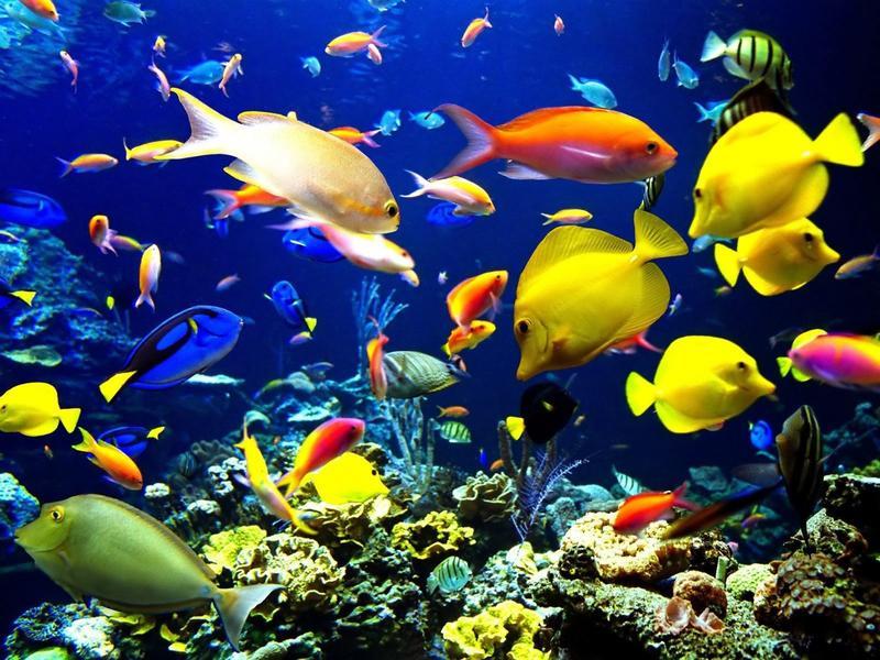 Biological Diversity Wallpaper For Biological Diversity