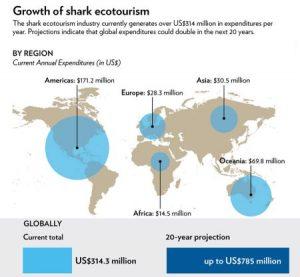shark-tourism