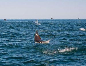 """Researchers have dubbed Cabo Pulmo """"the most successful marine reserve in the world."""" Photo: Octavio Aburto."""