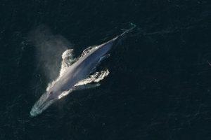 Photo: NOAA photo library