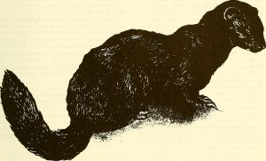 By Internet Archive Book Images [No restrictions], via Wikimedia Commons.https://commons.wikimedia.org/wiki/File%3AThe_Canadian_field-naturalist_(1988)_(20332897078).jpg