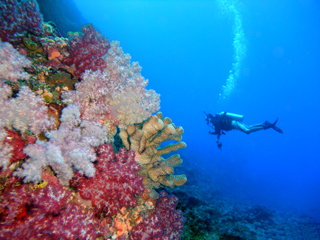 Photo courtesy NOAA. Divers begin by laying out transect lines at predetermined locations to guide the coral reef surveys.